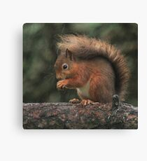 Squirrel shelter Canvas Print
