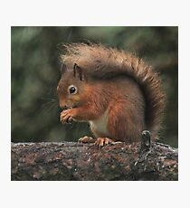 Squirrel shelter Photographic Print