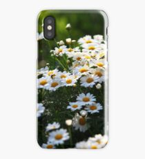 white daisies in the sun iPhone Case/Skin