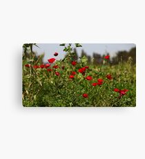 red poppy flowers in the field Canvas Print