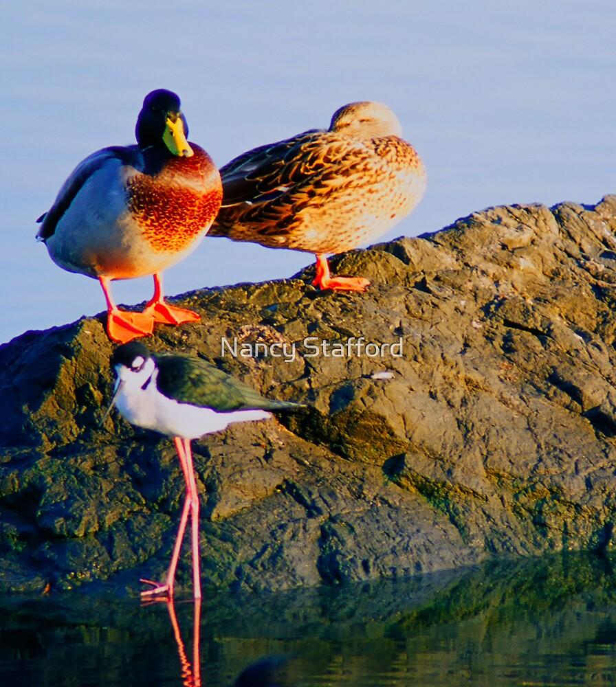 Two Ducks and a Black Neck Stilt by Nancy Stafford