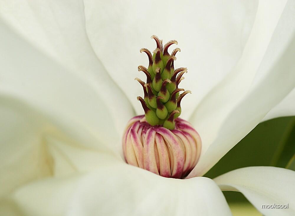 Magnolia turban by mooksool