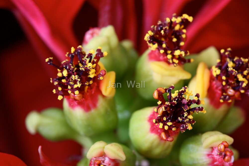 Christmas Bouquets by Jan  Wall