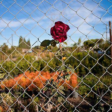 Corner of Coke & Rose by ReachOne
