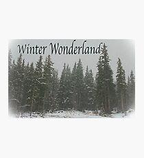 Winter Wonderland in the Woods Photographic Print