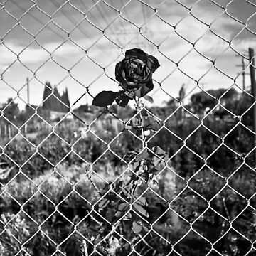Corner of Coke & Rose, BnW Vert. by ReachOne