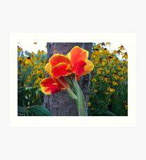 Canna Lily Art Print