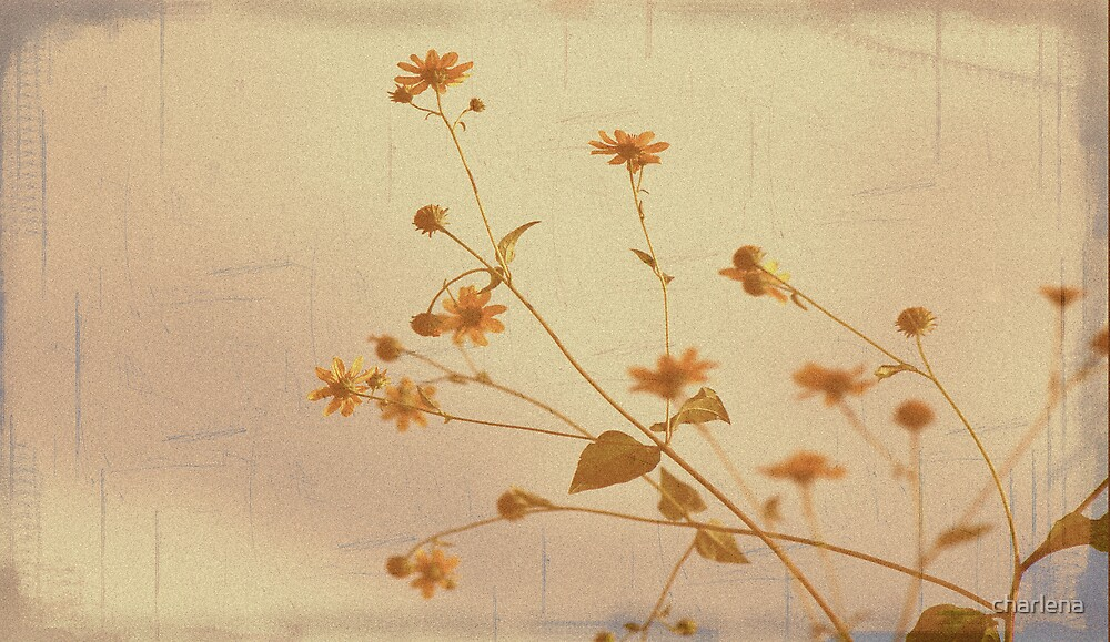 Memories by charlena