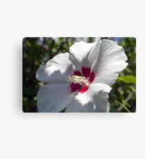 Hibiscus Bathing in the Sun Canvas Print