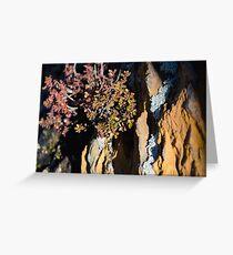 Smoky Mountain Lichen Greeting Card