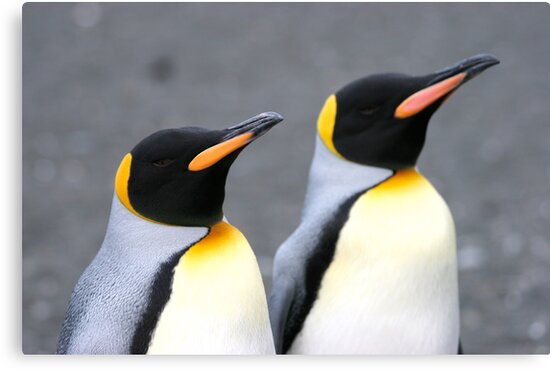 Penguin duo 1 by squires