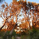 Golden arbor by Peter Krause