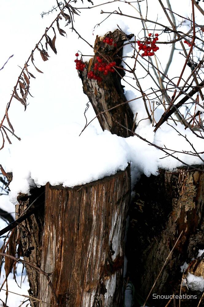 Winter scenes by Snowcreations