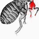 The flea... by Nuh Sarche