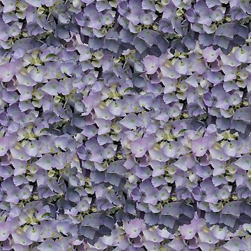 Purple Blue Pink Hydrangeas Blooming by empressofdirt