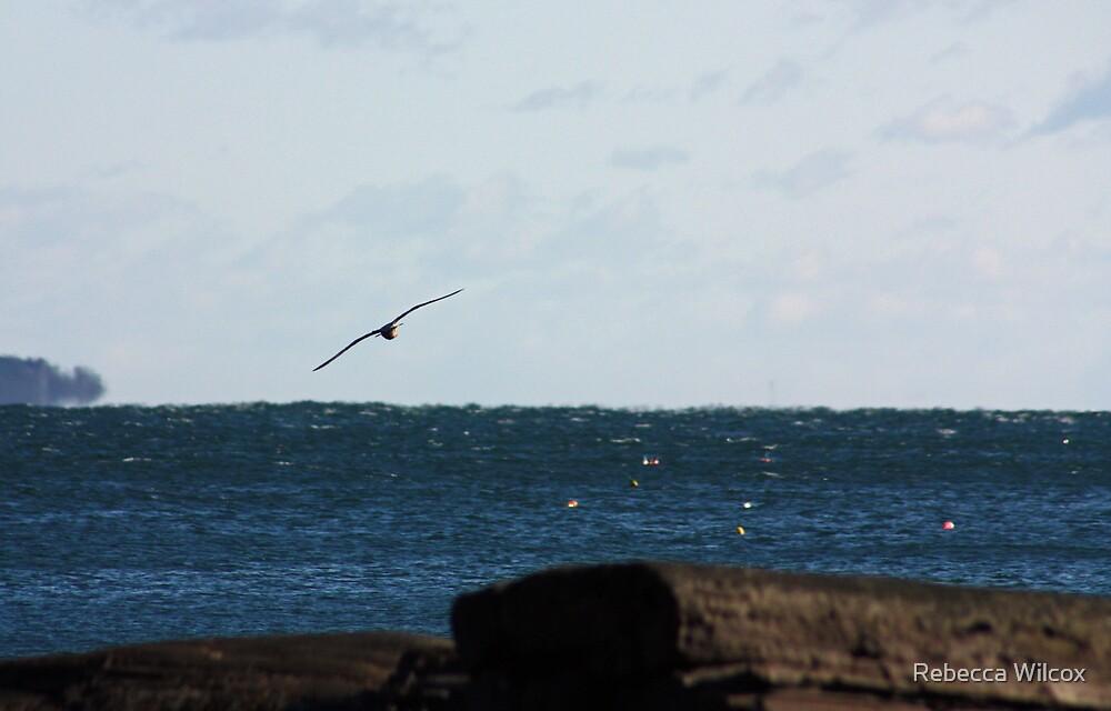 Catching The Wind by Rebecca Brann
