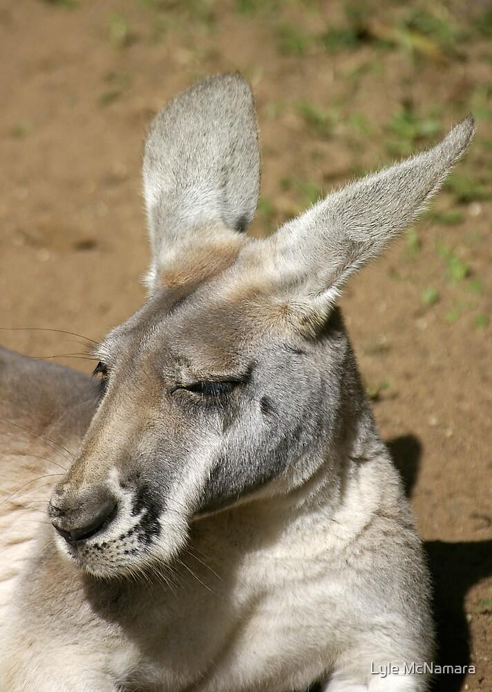 Kangaroo Portrait by Lyle McNamara