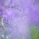 Lavender Spray by Nick Huggins