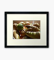 Fruitful Harvest Framed Print