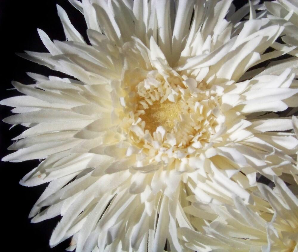 Glowing Petals by SalmaAssal