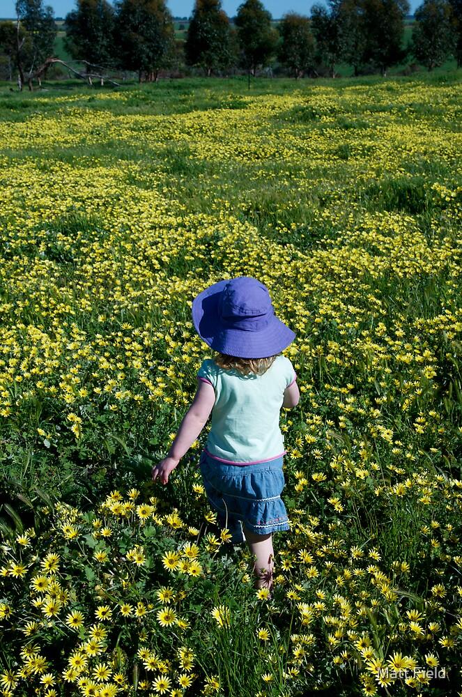 Daisy walk by Matt Field