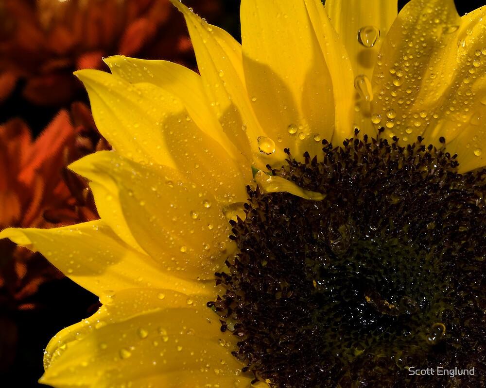 Sunflower shower by Scott Englund