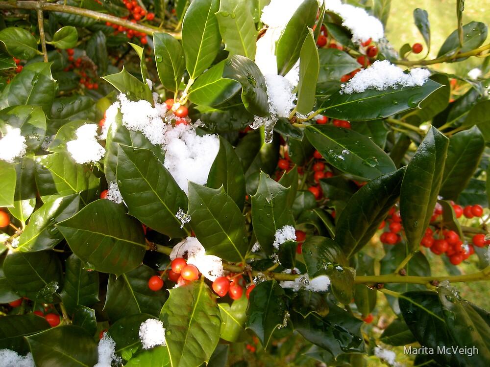 Holly Berries by Marita McVeigh
