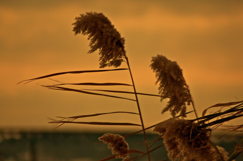"""""""Wisdom sails with wind and time"""" by WolfmanK"""