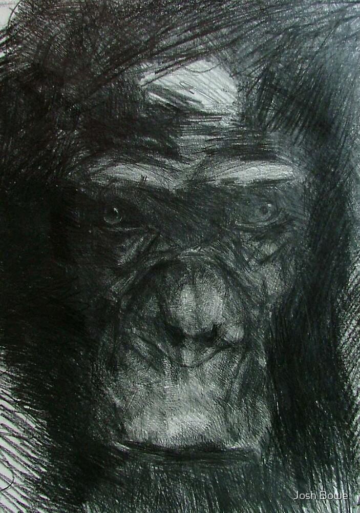 Chimp Study by Josh Bowe