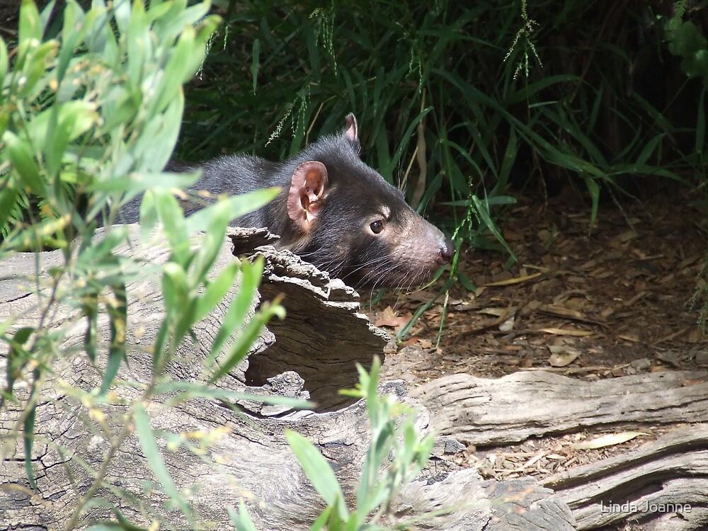 Tasmanian Devil by Linda Ragatz