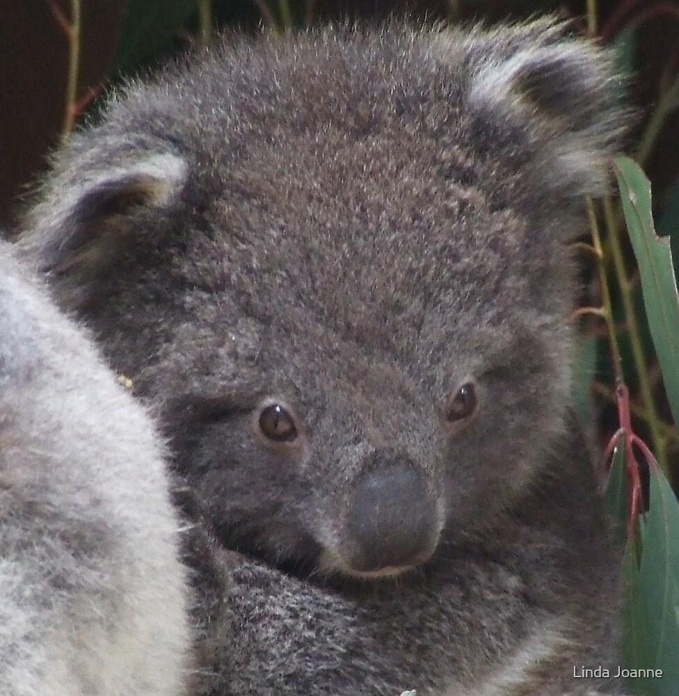 Baby Koala by Linda Ragatz