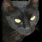 Photograph Of Jet Black Cat With Yellow Eyes by taiche