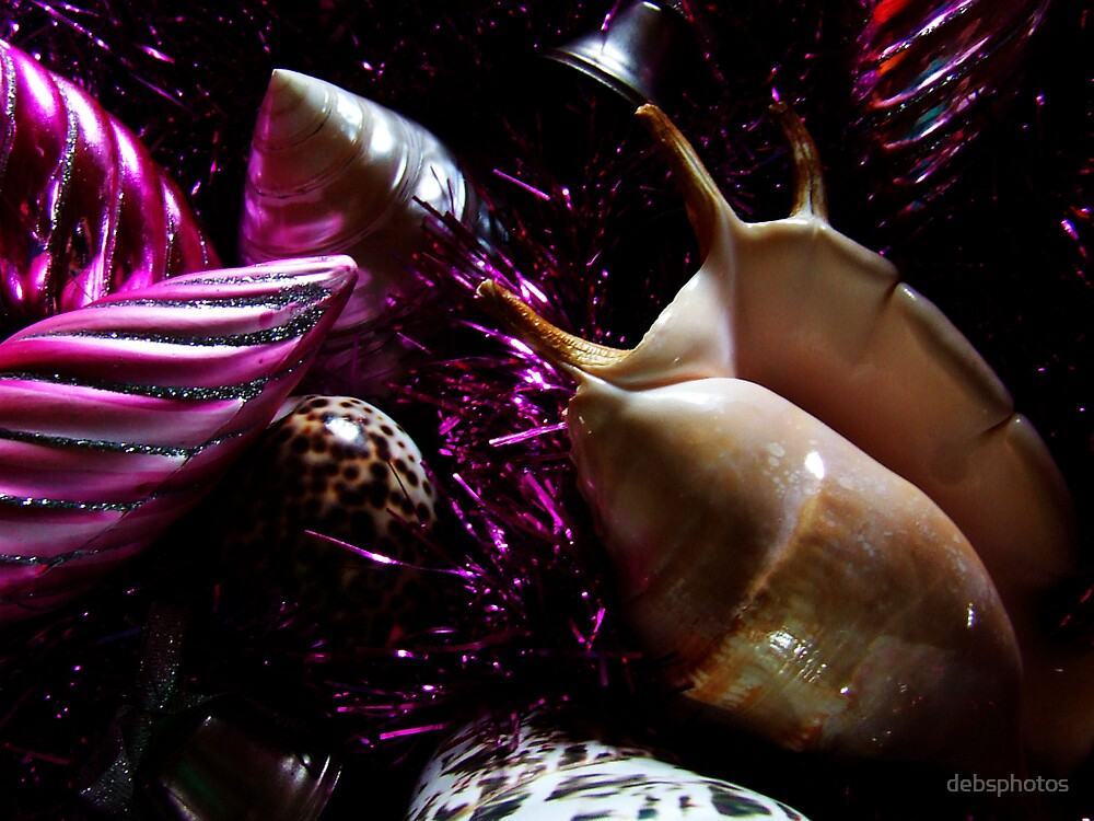 """Jingle Shells"" by debsphotos"