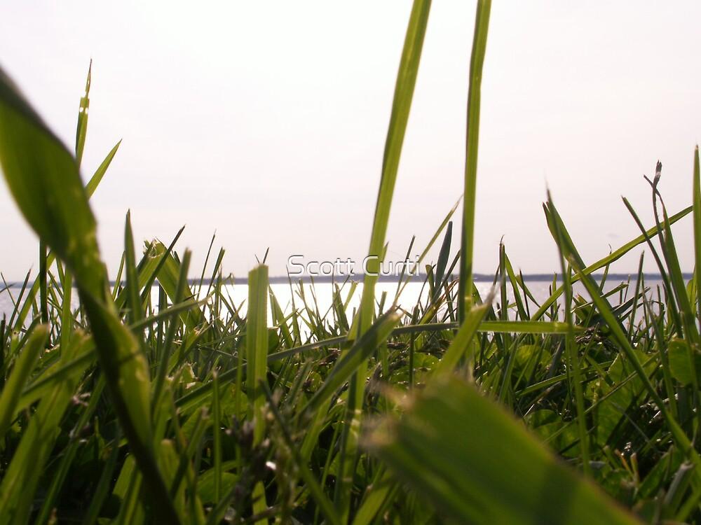 grassy plains by Scott Curti