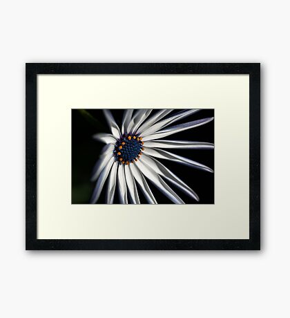 Brighten your Day - Daisy Framed Print