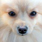 Teddy's Beautiful Face by IrishEyesMrsZ