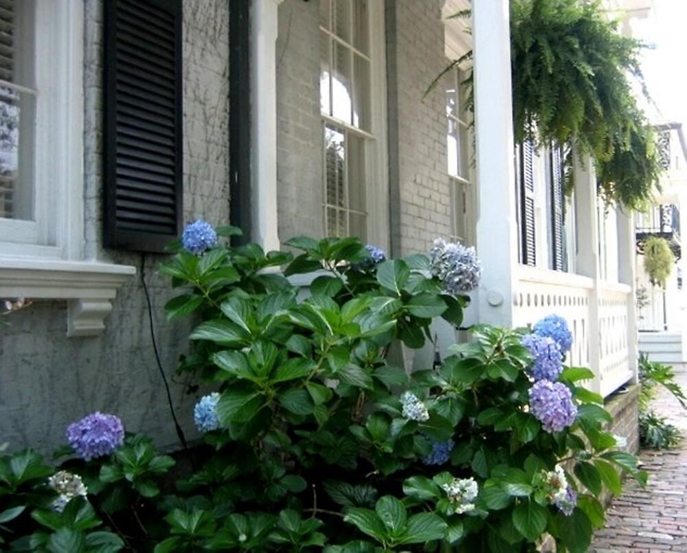 Savannah Hydrangeas by Magnoliadorn