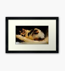 Beautiful Dreamer- Calico cat napping Framed Print