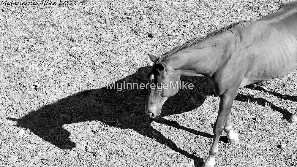 #632      Horse & Shadow  by MyInnereyeMike