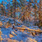 December morning 4 by Veikko  Suikkanen