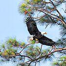 Eagle Series Pine Needles by Deborah  Benoit