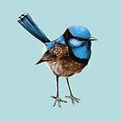 Big Blue Wren Cushion on Blue by ThistleandFox
