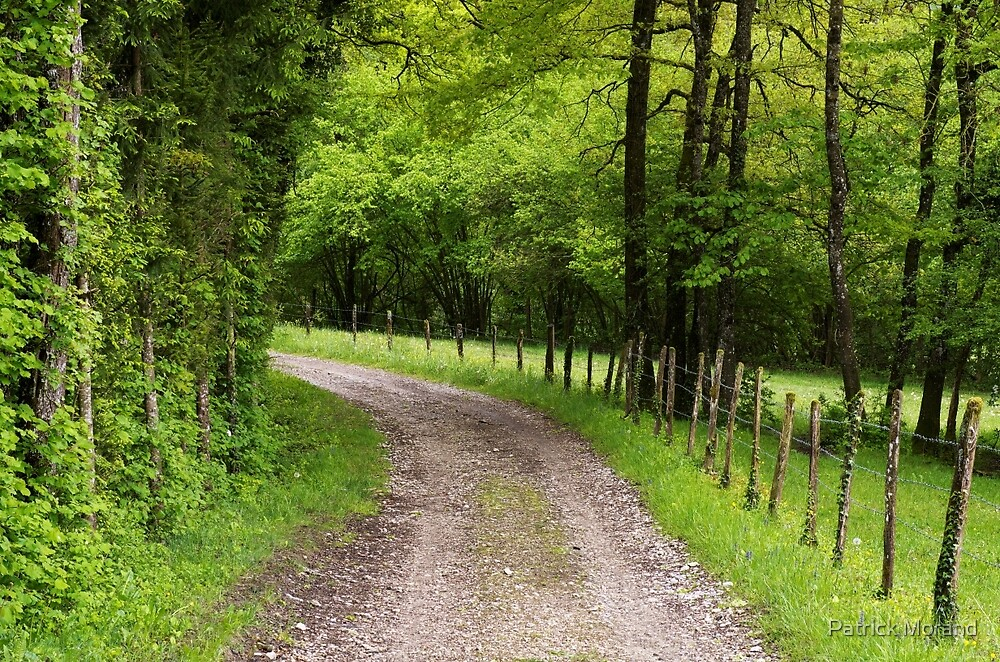 A path through fields and trees by Patrick Morand