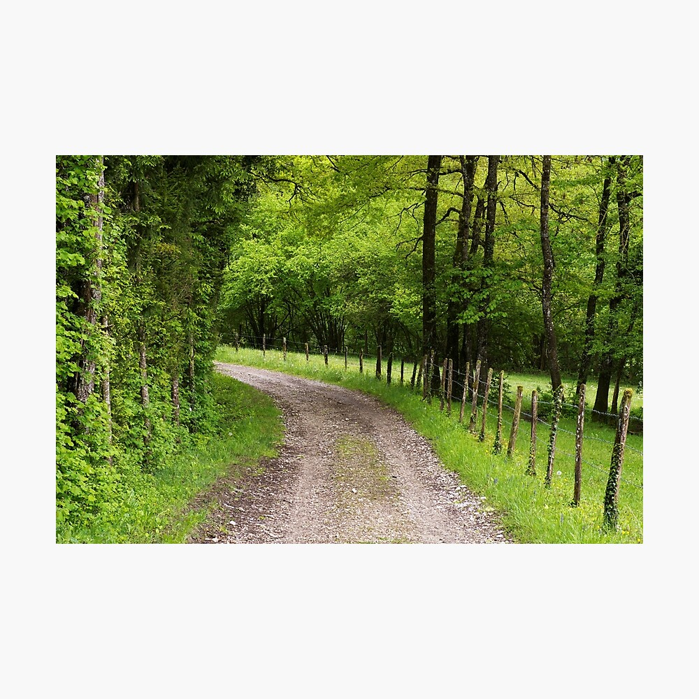 A path through fields and trees Photographic Print