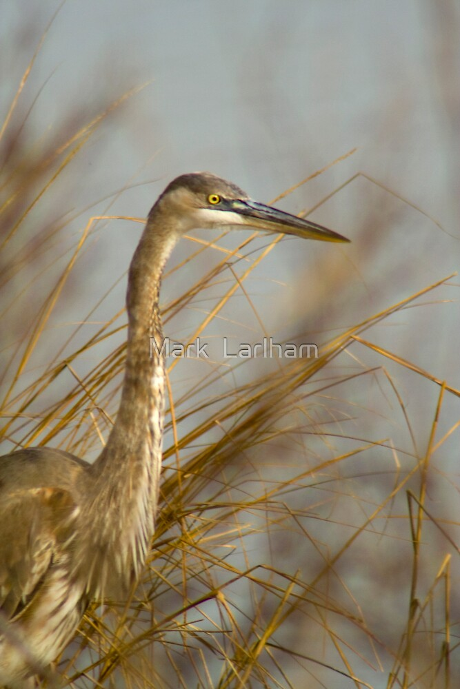 Heron by Mark  Larlham