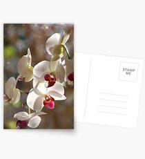 late Postcards