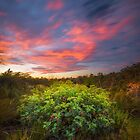 Grevillea Sunset by nathandobbie