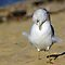 Preening Birds