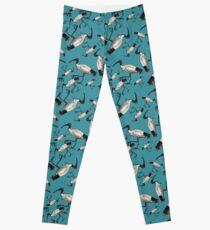 White Ibis / Bin Chickens Leggings