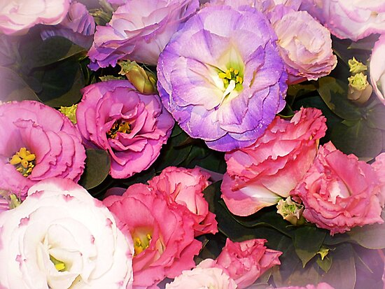 Lisianthus as beautiful  as any Flower by EdsMum